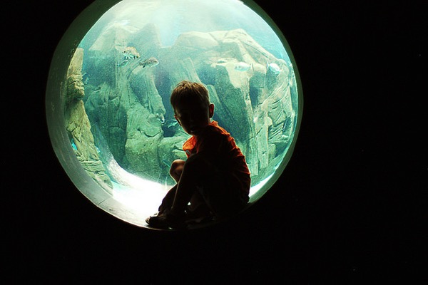 Young boy looking through round bubble window into giant aquarium