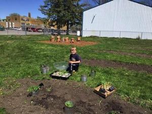Child gardening at Gilmore City-Bradgate Elementary School 01