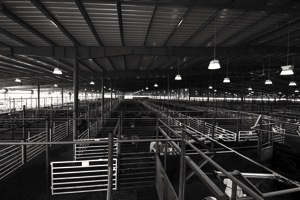 Bluegrass Stockyards
